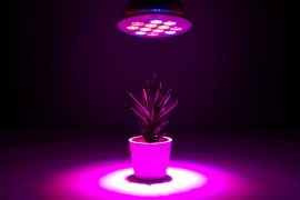 Lighted Plant